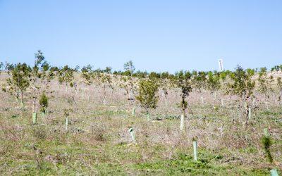 Más de 24.000 árboles en el Bosque Scania