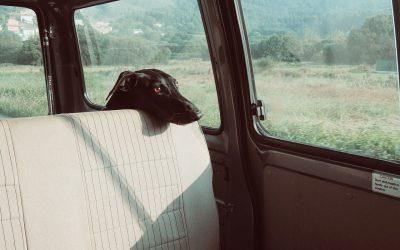 Cómo actuar si ves a un perro encerrado dentro de un coche