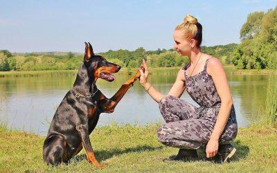 ¿Puede el COVID-19 afectar a nuestras mascotas?